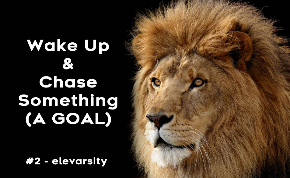Wake up and Chase Something (A GOAL)